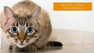 Read more about the article Sacco a pelo animali